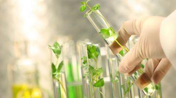 Las empresas de obtención vegetal celebran con optimismo el Día del Medio Ambiente