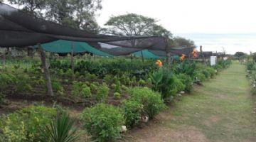 Argentina impulsa las semillas ecológicas locales con calidad certificada