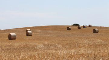 Baleares pone en marcha la campaña de suministro de semillas certificadas de cereales y leguminosas