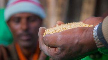 La Universidad de Wageningen busca inversores para un proyecto de desarrollo del sector de las semillas en África