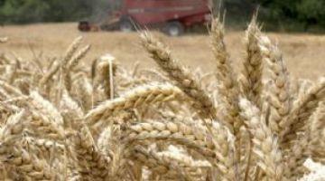 Dos nuevas sentencias condenatorias por la explotación ilegal de cereal