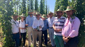 Murcia evalúa la viabilidad del cultivo de ocho variedades de lúpulo en el Noroeste de la Comunidad