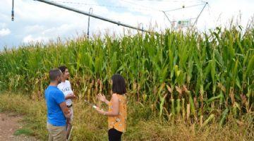 Investigadores de Andalucía, Extremadura y Castilla y León buscan producir cereal más rentable y sostenible
