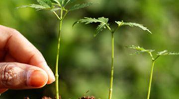 El MITECO introduce un nuevo control en frontera para luchar contra la entrada de especies exóticas invasoras de plantas y animales