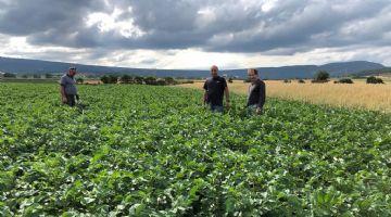 Udapa realizará un estudio agronómico y de aceptación comercial de la variedad de patata 'Beltza', creada por Neiker