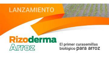 Llega Rizoderma Arroz, el primer curasemillas biológico para el cultivo