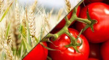 Más de 2000 variedades de semillas: ahora cultivos extensivos de LG Seeds y hortícolas de Ramiro Arnedo