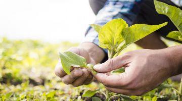 La propiedad intelectual en plantas y semillas, factor clave de la competitividad agraria