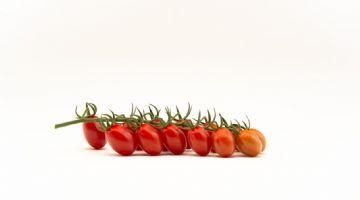 Top Seeds International lanza Fanello, su primer tomate mini-plum